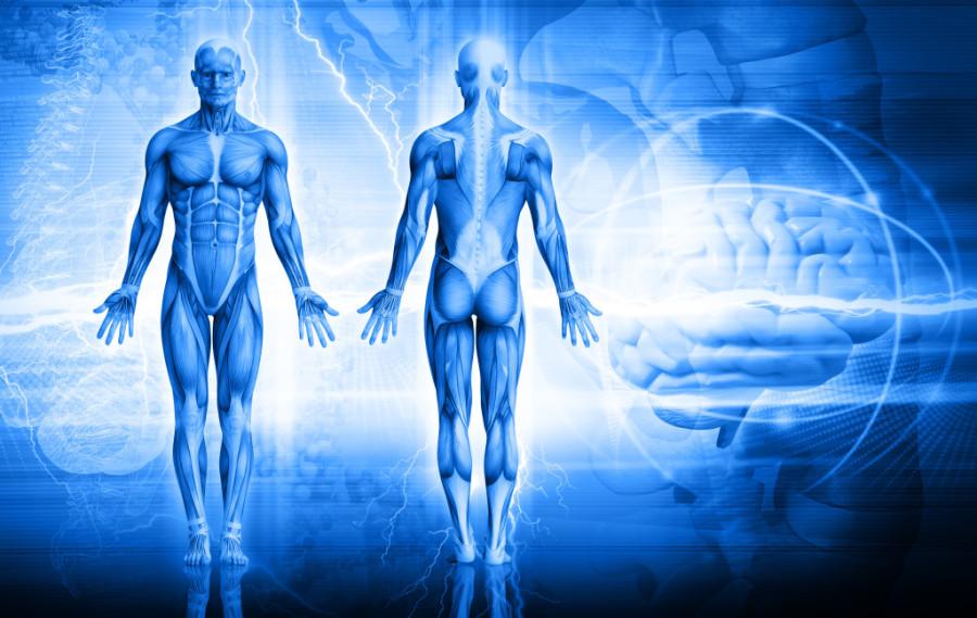 MMem 0448: Anatomy memory tricks for memorizing structural relationships
