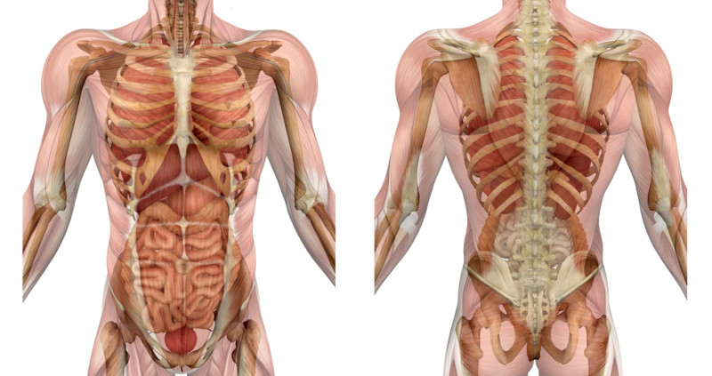 MMem 0048: To learn human anatomy, how should I organize the topics?