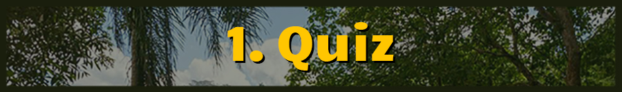 Accelerated Spanish quizzes (Master of Memory)