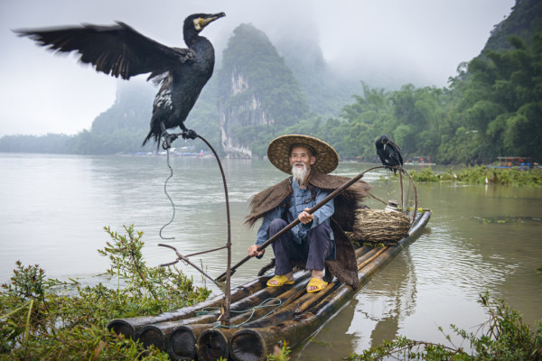 MMem 0155: Memorizing bird calls to identify in nature