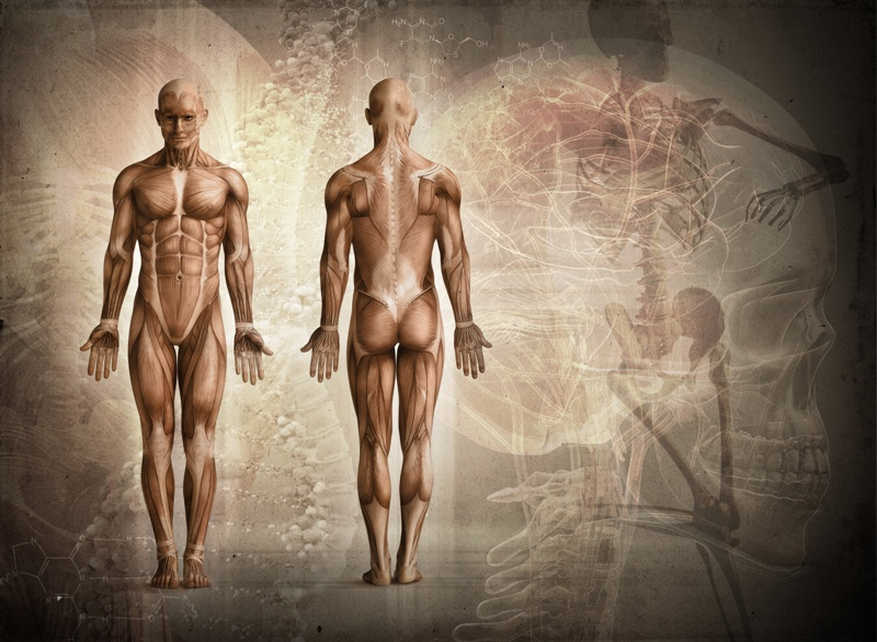 MMem 0281: Reprise: To learn human anatomy, how should I organize the topics?