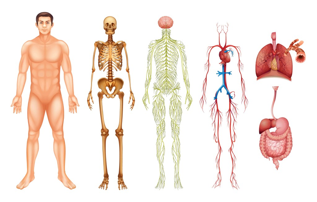 MMem 0314: Reprise: To learn human anatomy, how should I organize the topics?