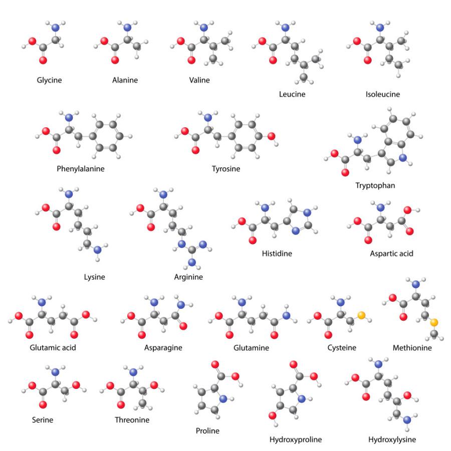 MMem 0455: Memorize molecular structures for amino acids
