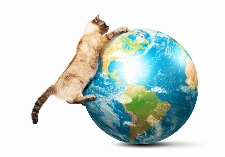 MMem 0545: Reprise: Learn the world's cats by population!